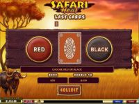 Safari Heat PlayTech Slot Gamble Screen